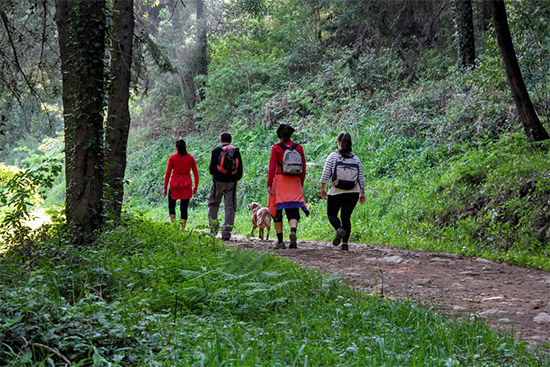 Walk Hike Portugal Sintra Forest